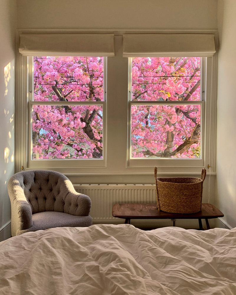 View of blossom tree from bedroom window - Charlotte Bland photography