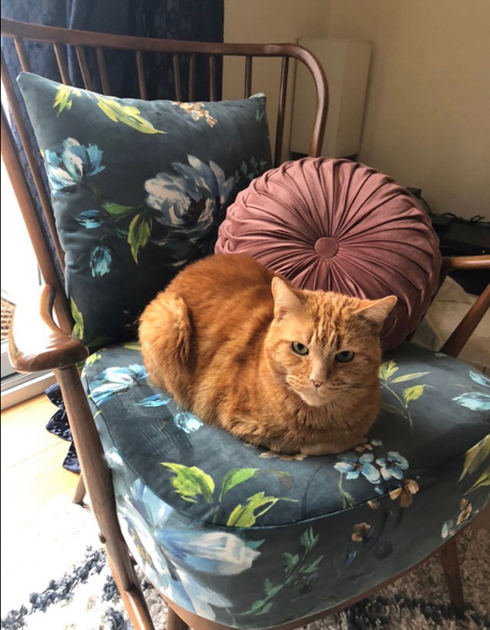Cat sat on floral patterned chair
